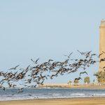 VIAJES PARA DESPUÉS DEL CORONAVIRUS: Gran Canaria, uno de los primeros destinos turísticos en recuperarse… por méritos propios