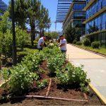 Varios huertos urbanos ecológicos de Madrid que emplean a trabajadores con discapacidad donarán su producción a Bancos de Alimentos