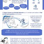 La Fundación Instituto Roche publica un documento sobre biología molecular dirigido a la población general